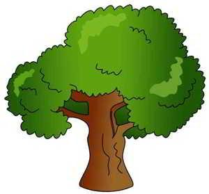 一棵树的样子以及形状