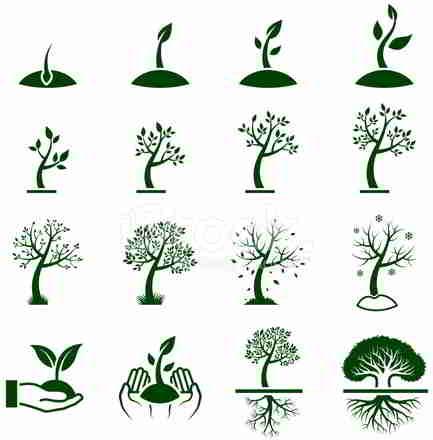 植物学家眼中:一棵树的成长过程