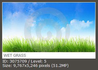 WET GRASS 湿草