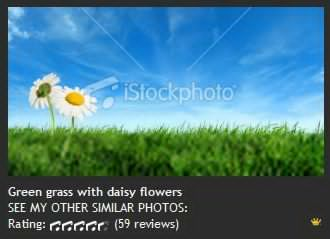 Green grass with daisy flowers 绿草与雏菊花