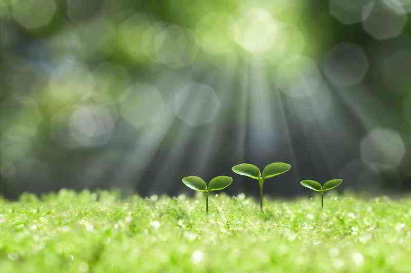 萌芽口碑很重要,就像种子刚开始萌芽一样