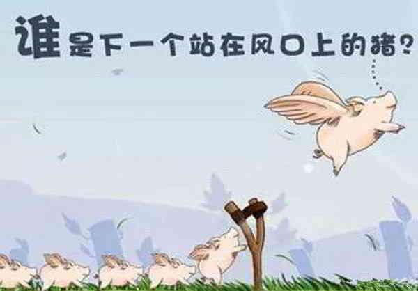 谁是下一个站在风口上的猪?