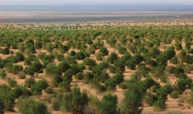 支付宝蚂蚁森林,真的是在种树吗?